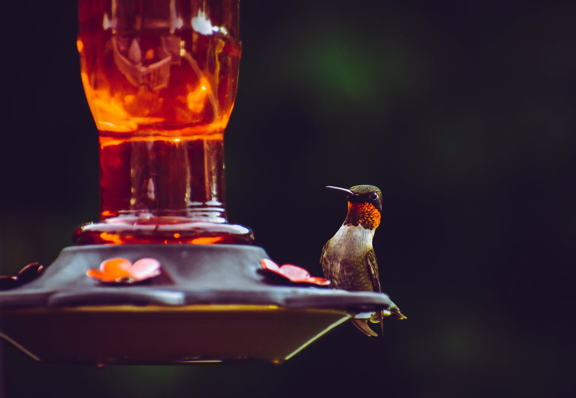 selective focus photography of ruby throated hummingbird perched on bird feeder